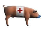 swine_flu_pig
